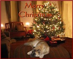 Artie's Holiday Card