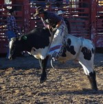 Rodeo Bull Riding Event