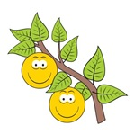 Smileys On A Tree Branch