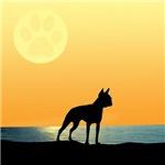 Boston Terrier Surfside Sunset