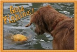 GOLD FISHING! (GOLDEN RETRIEVER!)