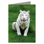 Big Cat Greeting Cards Plain