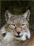 Siberian Lynx Caps & Intimate Apparel