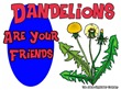 Dandelions Are Your Friends
