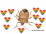 Rainbow Stink Bug