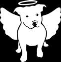 Pit bull Angel