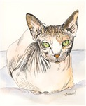 CATS - THE SPHYNX