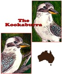 BIRDS - THE KOOKABURRA