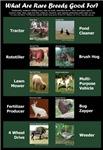 Rare Breed Jobs Poster
