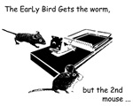 The 2nd mouse