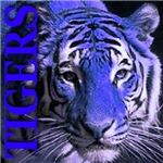 Tigers Midnight Blue