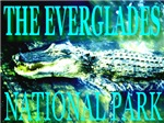 The Everglades Alligator