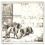 Compainons Cobbold 1797-1877