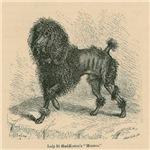 Poodle 1879 Digitally Remastered