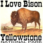 I Love Bison Yellowstone National Park