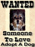 Wanted Someone To Love