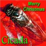 Merry Christmas Cicada