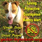 No Breed Specific Legislation