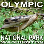 Kissing Slugs? Look Again.  Olympic NP