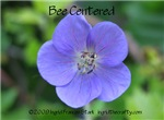 Bee Centered