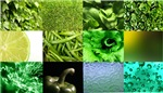 Green Photography Collage