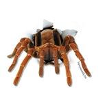 Spider Burster
