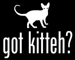 got kitteh?