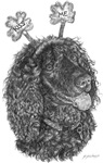 Kiss Me I'm an Irish Water Spaniel!