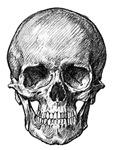 Skull / Bones