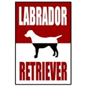 Classic Red Labrador Retriever