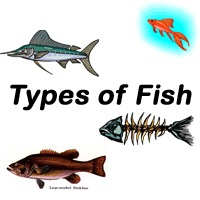 All Types of Fish