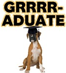 Graduation Boxer Dog
