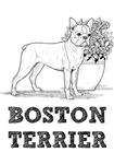 Boston Terrier Illustration