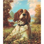 Britanny Spaniel Watercolor