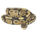Snake T-Shirts & License Plate Frames