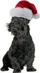 Scottish Terrier Santa T-Shirts