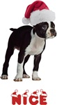 Nice Boston Terrier