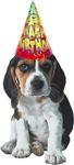 Beagle Birthday