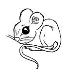 Panya's Mouse