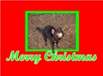 Aussie Christmas Cards & Gifts, Tasmanian Devil!