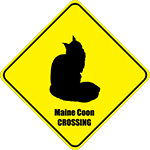 Maine Coon Crossing