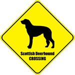 Scottish Deerhound Crossing