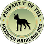 Property of the Mexican Hairless Dog