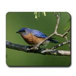 Fun Bluebird Items