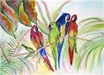 Parrots, Pelicans, Egrets, Flamingos