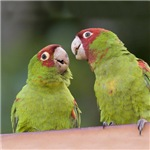<h3><b>Wild Parrots of San Francisco</h3></b>