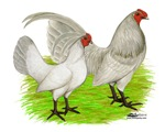 Old English Self Blue Chickens