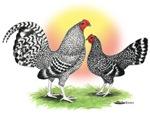 Cuckoo OE Bantams