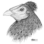 Tassle Gamecock