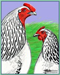 Columbian Cock and Hen